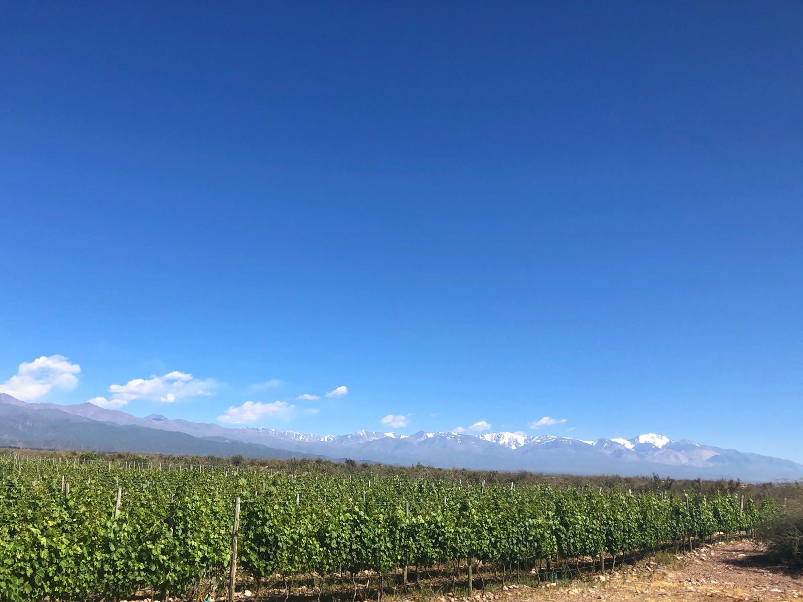 Blick vom ersten Weingut in Richtung Anden