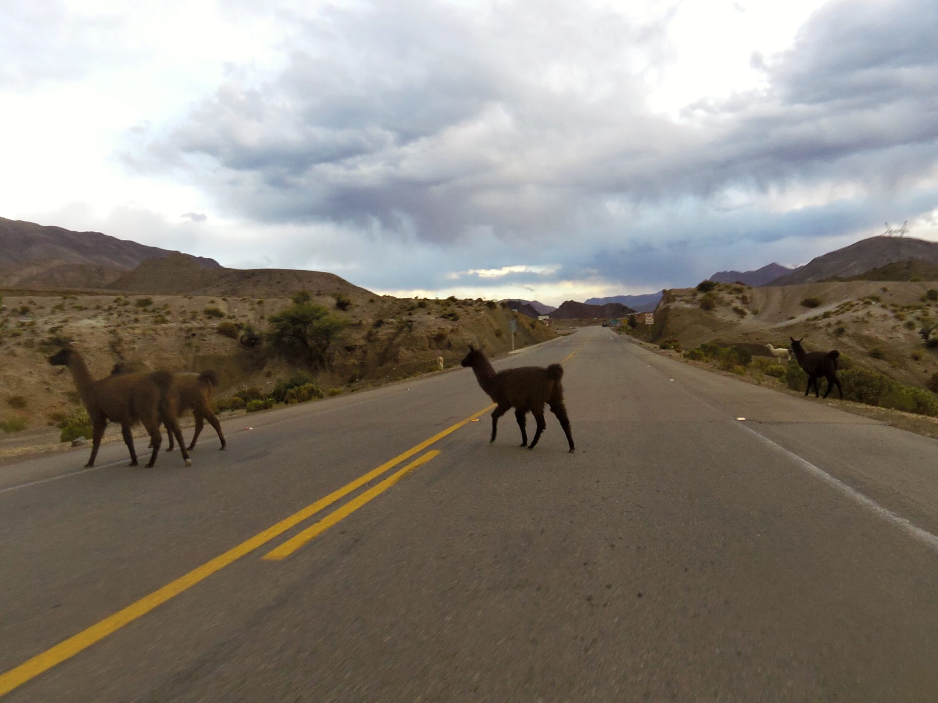 Tiere auf der Fahrbahn