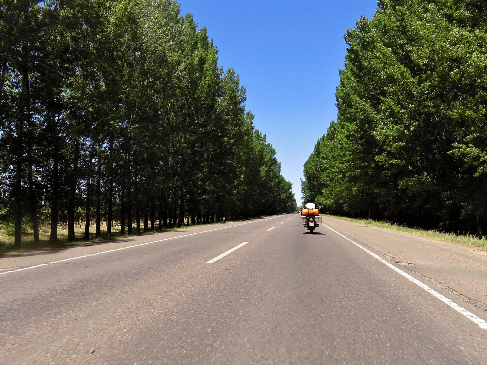 Eine Allee in Argentinien