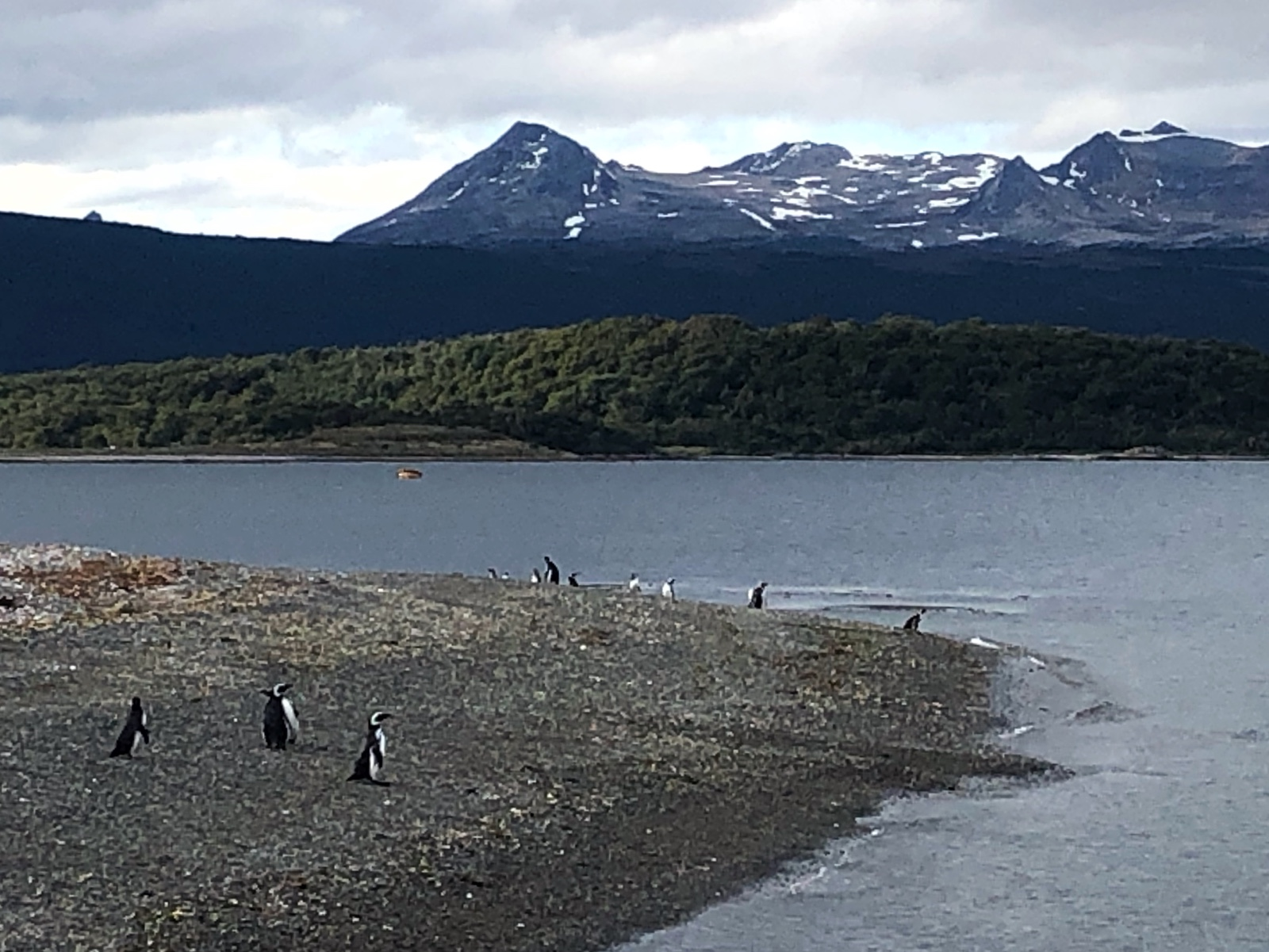 Da sind die ersten Pinguine zu sehen
